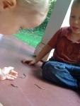 earthworm races eoh, cMh